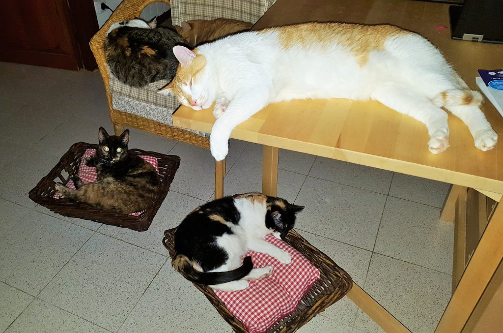 Relaxed cats